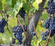 wine tour tuscany