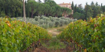 tuscany wineyards- bike tour
