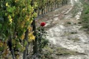 Italy wine bike tour