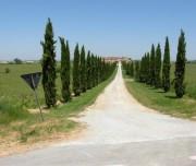cypress road cycling trip