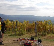 wineyards in tuscany by bike