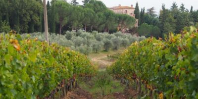 tuscany wineyards- bike tour