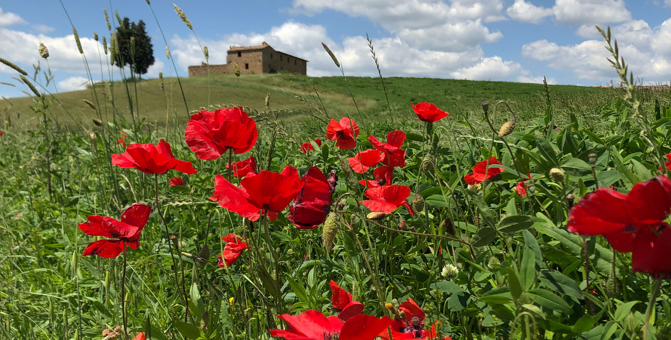 Cycling Tuscan Wine Country